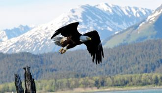 9 Nts Vancouver Stay with Alaska Inside Passage Cruise